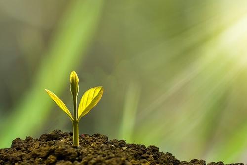 Biljka raste iz zemlje